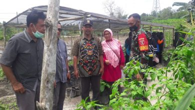Photo of Pekarangan Milik Babinsa Koramil Penajam Jadi Incaran Kunjungan Study Banding KWT Sepaku